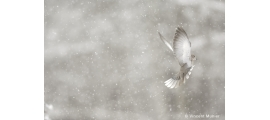 Other birds by Vincent Munier